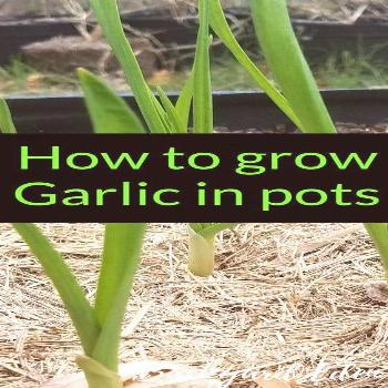 Container Garden Recipe - Great Ideas and Tips for Beginner | shade container garden ideas | spring