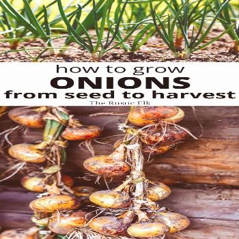 How to Grow Onions from Seed Growing onions from seed isn't very difficult and gives you a lot more