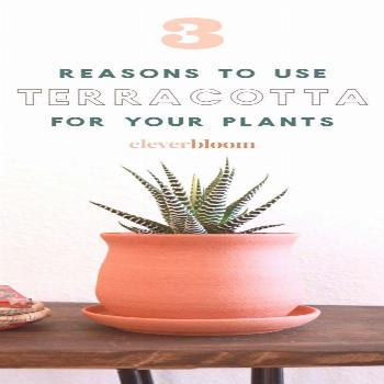 These days there are so many different kinds of pots for your plants. Plastic, ceramic, terracotta,