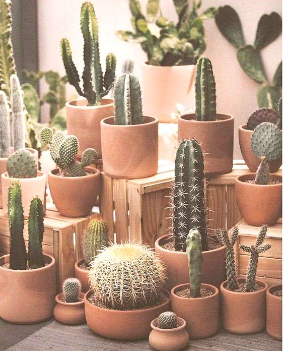 Love the cacti grouping in the same type of terracotta pots.