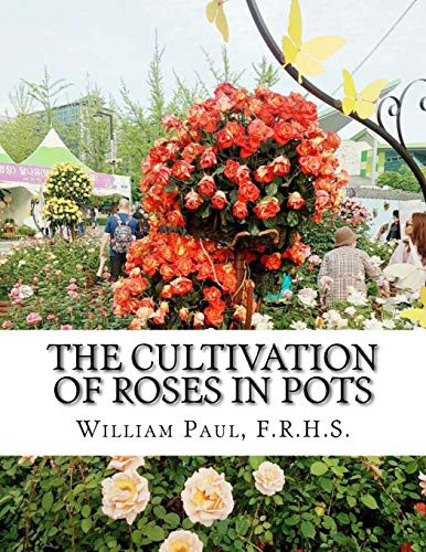 The Cultivation of Roses in Pots Or Growing Roses in